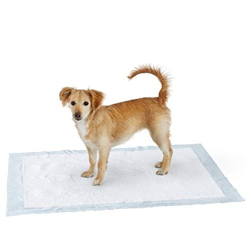 Amazon Basics Hygieneunterlagen für Haustiere, Groß, 60 Stück
