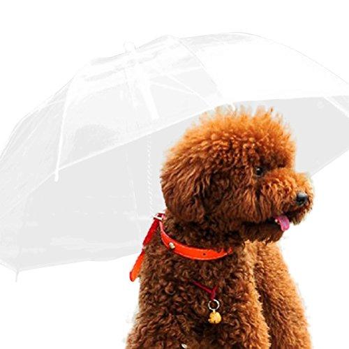 Cosanter Transparenter Hunde-Regenschirm mit Hundekette, wasserdichtes Seil