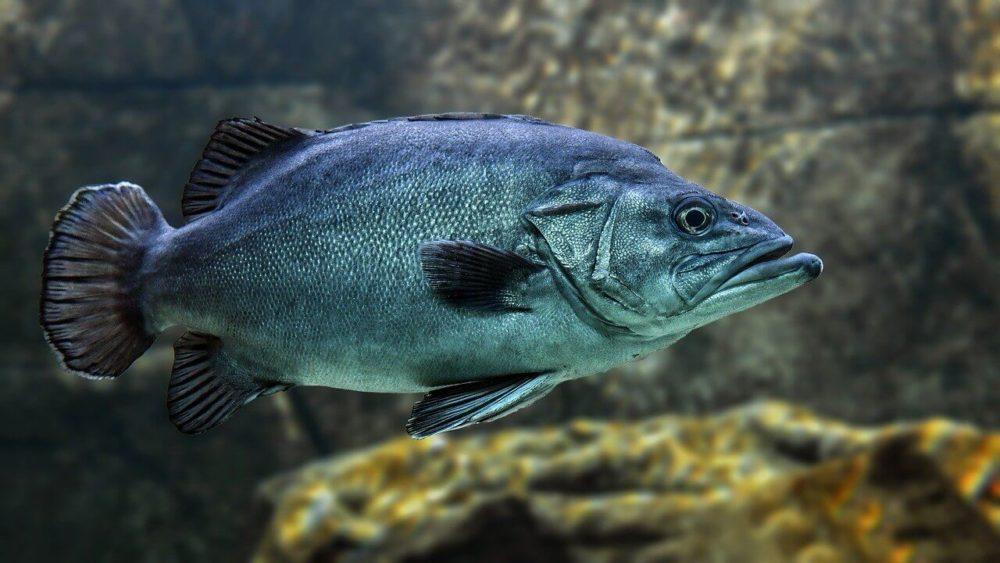 Fischschuppen sehen sehr schön aus