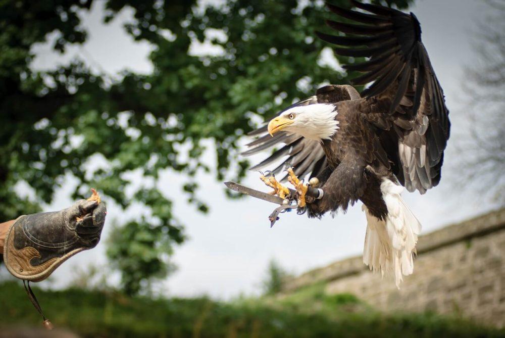 Vogelveranstaltungen werden gerne besucht