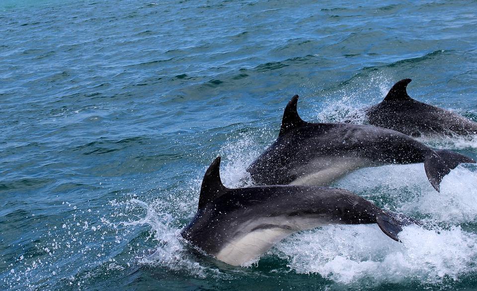 delfin-gefahr-aussterben
