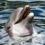delfin-raubtier