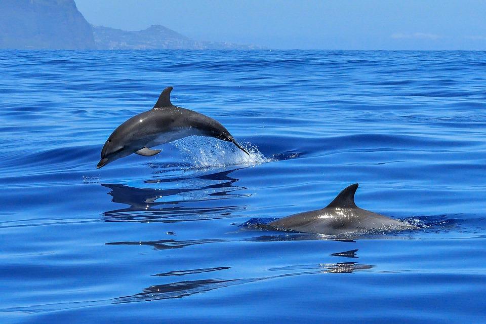delfine-gattungen