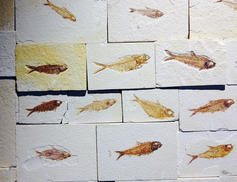 fische-fossilien-urzeit