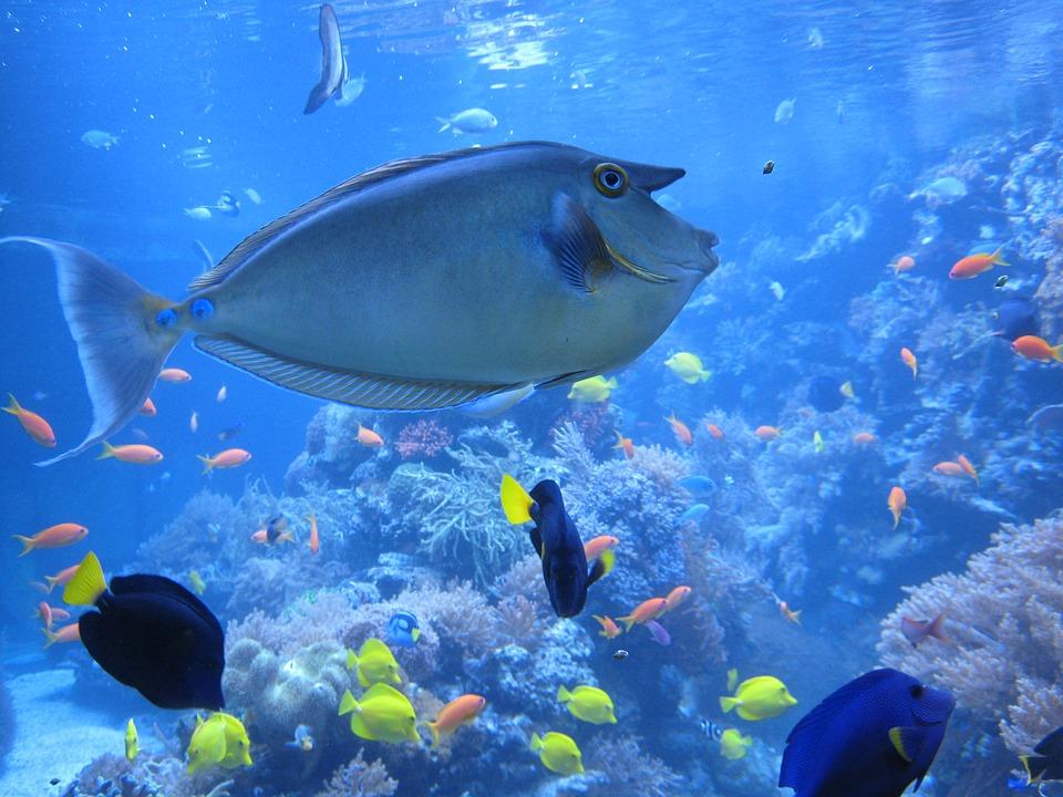 fische-lebensraum