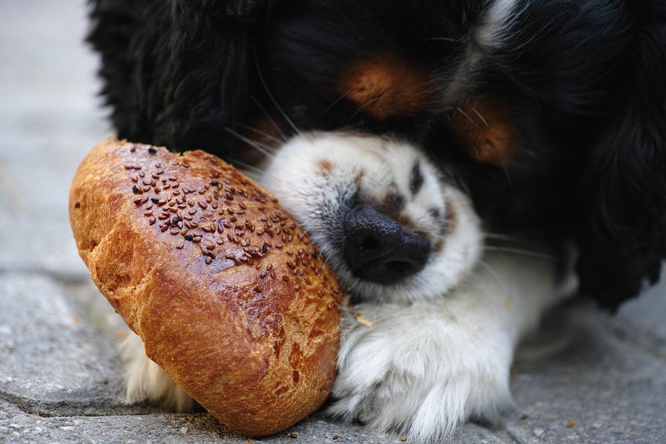 hunde-trockenfutter-ohne-getreide