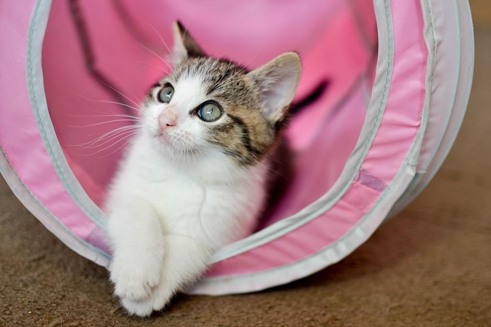 katzenbaby-zuechter
