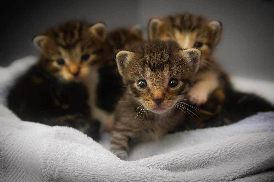 Fortpflanzung Katze
