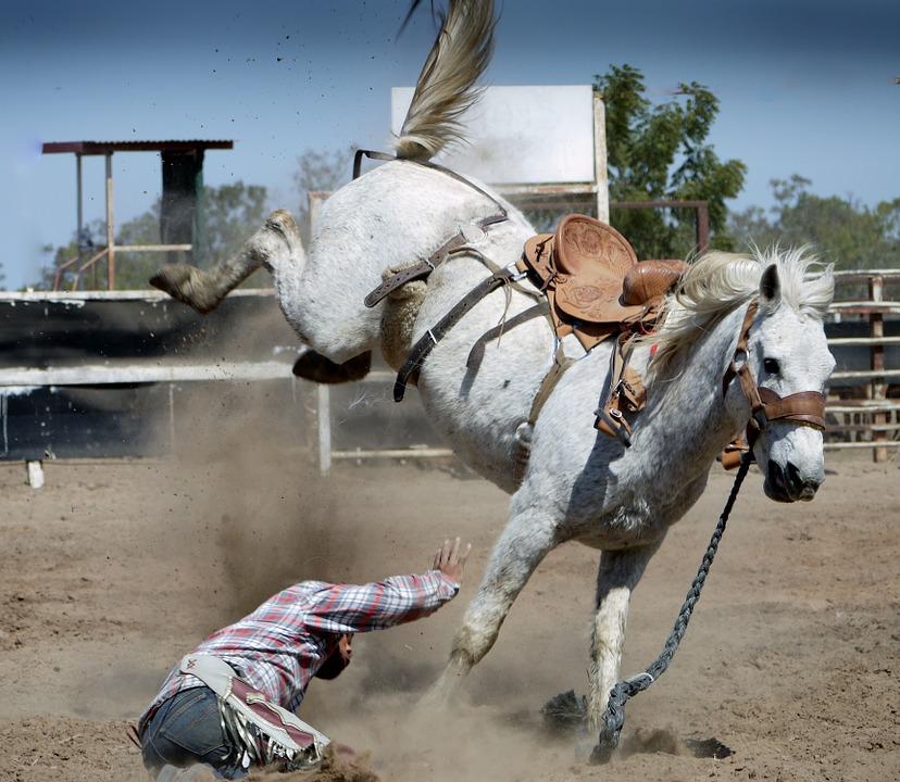 pferd-versichern