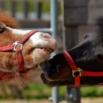 pferde-lebensversicherung-was-beachten