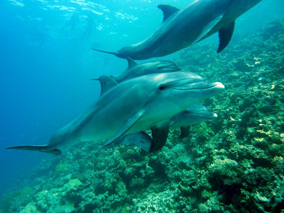 sueßwasserdelfine