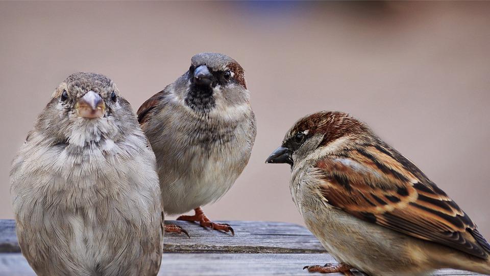 vogel-kommunikation
