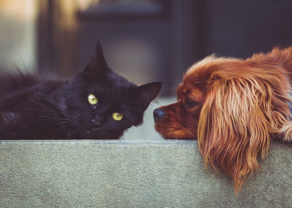 Katzenbild: Hund und Katze liegen gemeinsam auf der Couch