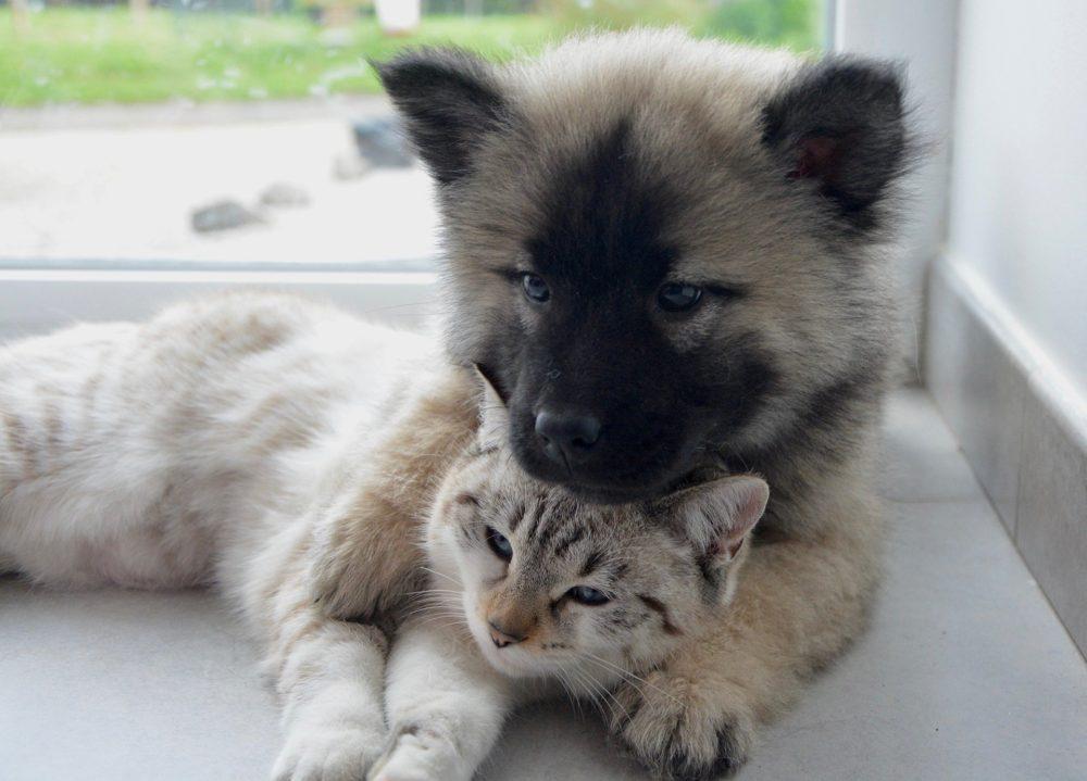 Katzenbild: Zwei Welpen unterschiedlicher Tierarten