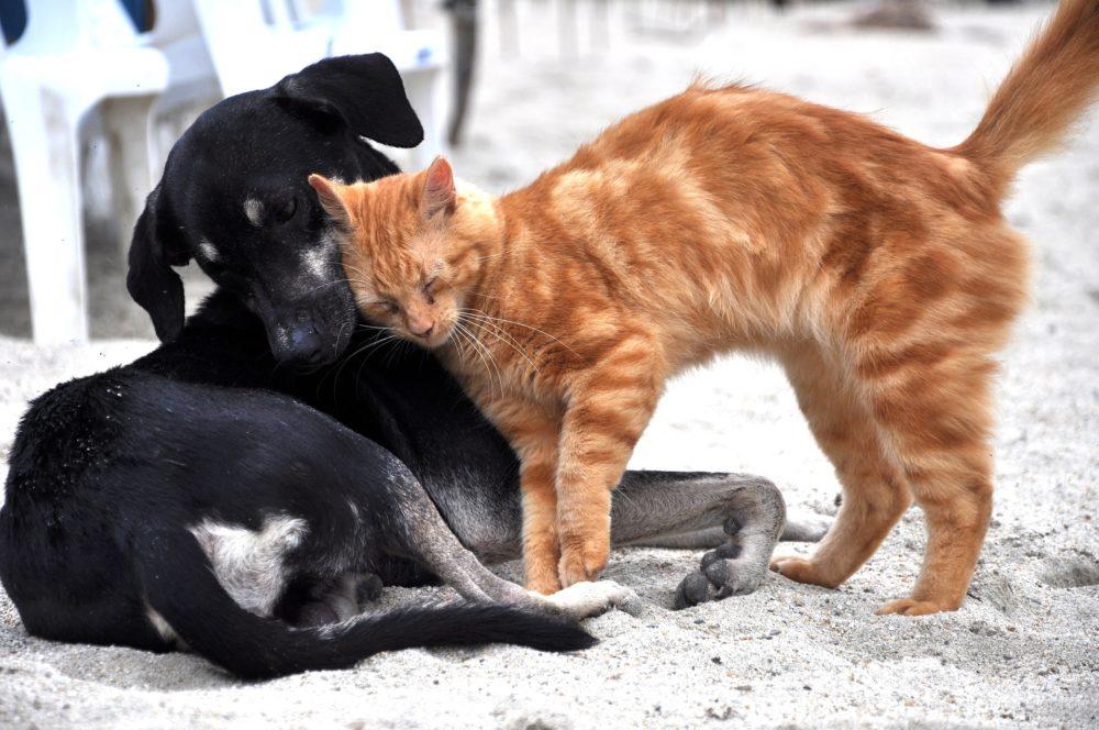 Katzenbild: Katze mit schwarzem Hund auf Straße
