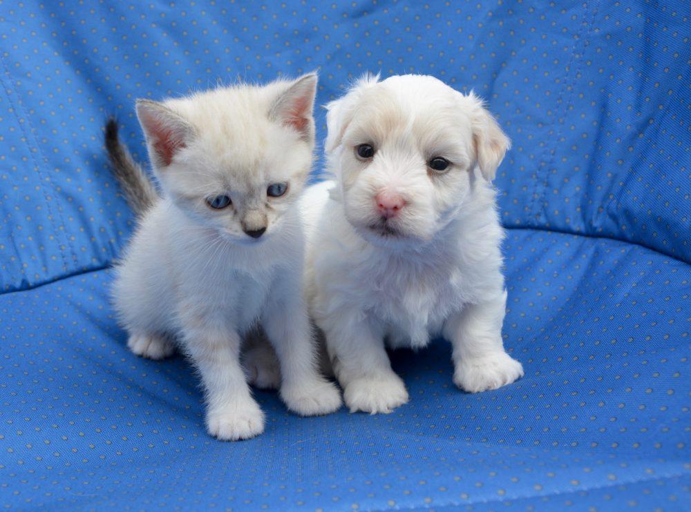 Bild von Kitten und Hundewelpen