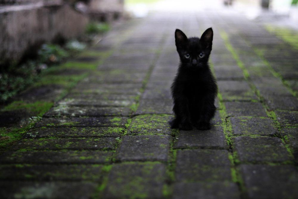 Katzenfoto: Eine schwarze Babykatze in der Nachbarschaft