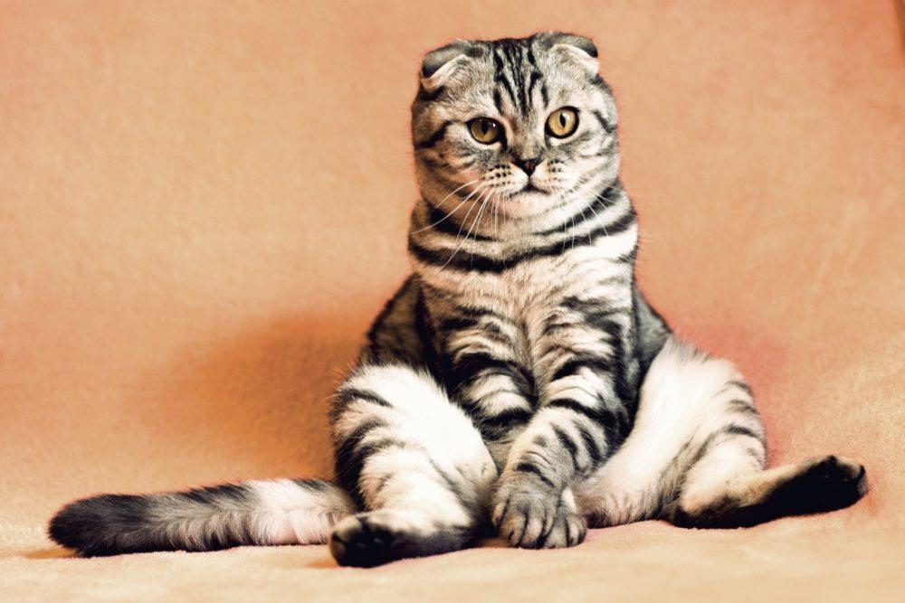Katzenbild: Diese Katze sitzt lustig.