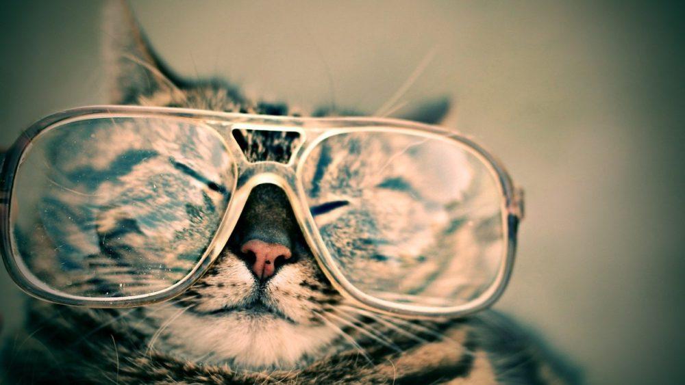 Katzenbild: Diese lustige Katze trägt eine Brille.