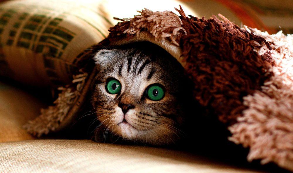 Katzenbild: Katze hat sich unter der Decke versteckt.