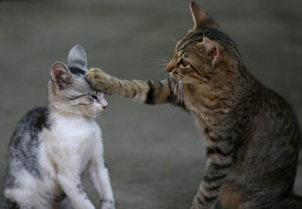 Katzenbild: Zwei Katzenfreunde in einem sehr ernsten Gespräch.