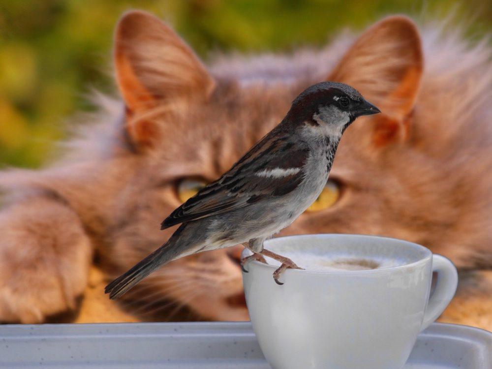 Katzenbild: Katze direkt hinter einem Vogel auf der Lauer.