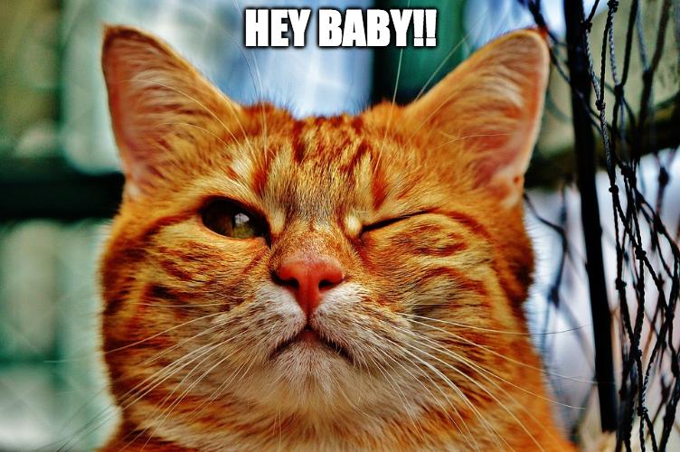Lustiges Katzenbild Meme: Hey Baby