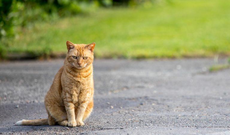 Katze Entlaufen Was Tun