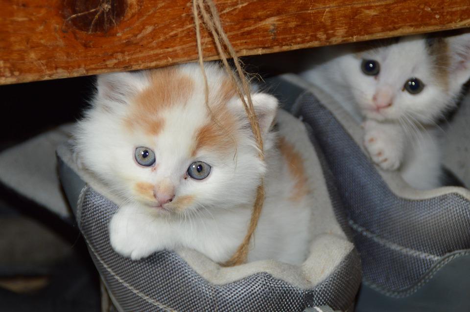 katzen-paarung-babys