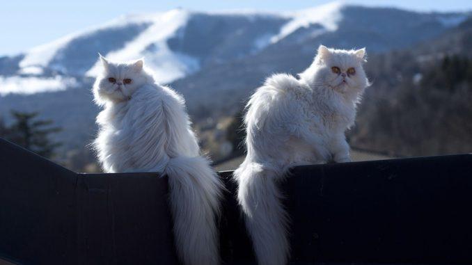 Lustige & Schöne Katzen Bilder