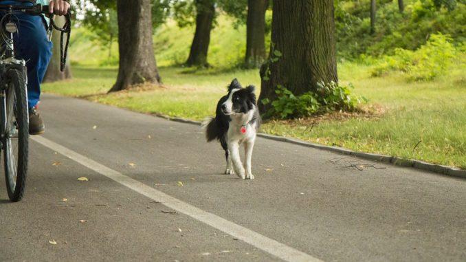 hund-laeuft-fahrrad-hinterher