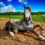 pferdegesundheit