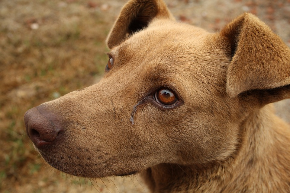 tierkrankenkasse-bild-kranker-hund