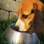 hochwertiges-hundefutter-bild