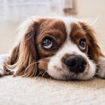 hunde-sauberkeitserziehung-stubenrein