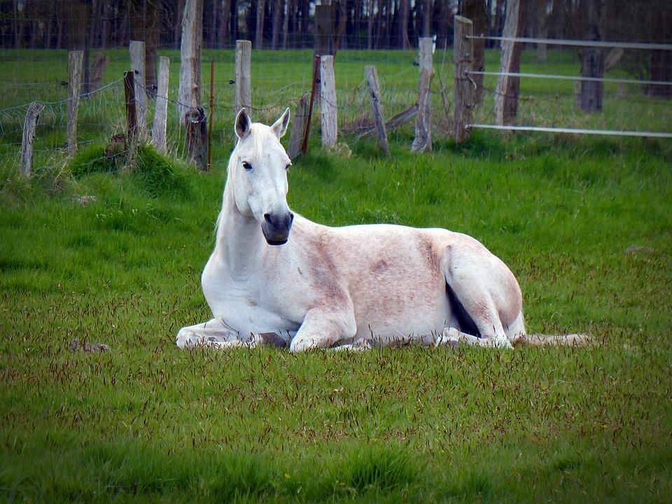 pferd-liegt-auf-boden