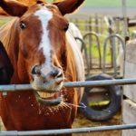 pferdeerziehung-bild