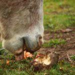 pferdefutter-selbst-mischen