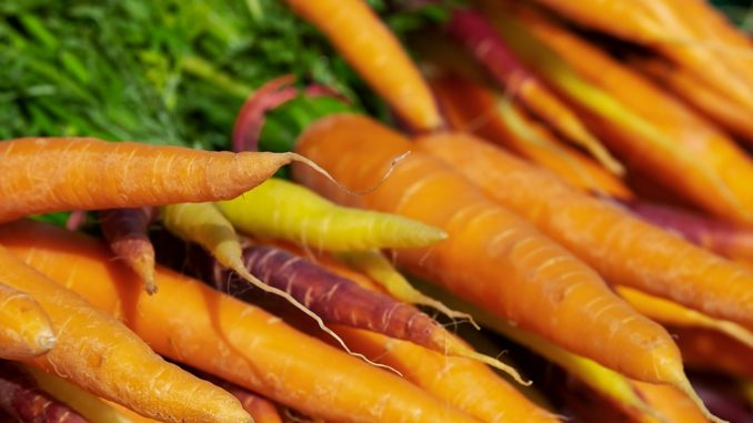 Karotten sind eine beliebte Nahrung für Deutscher Riesen