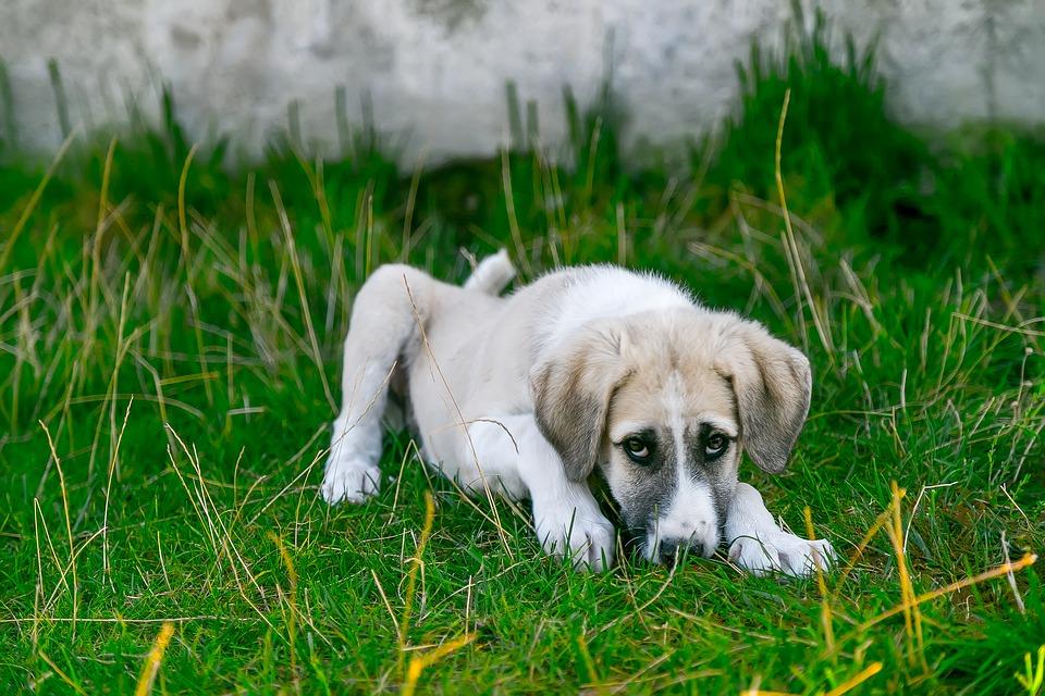 Baldrian für Hunde wirkt beruhigend