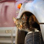 Katzenabwehr_auto