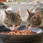 Anifit Katenfutter für zwei gesunde Katzen