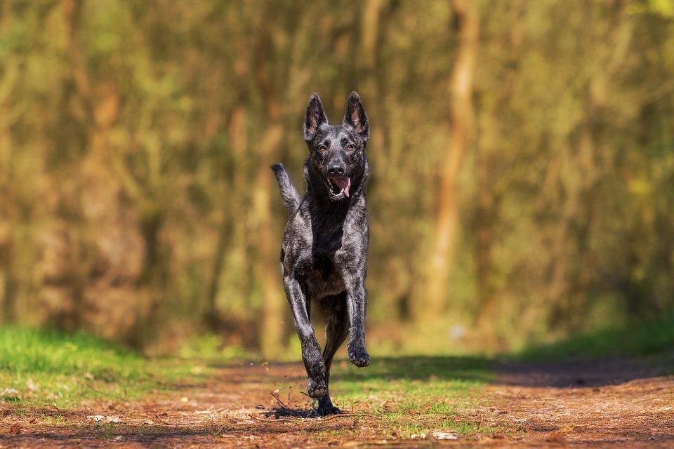Hund-der-bellt