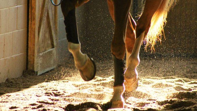 Salbe für Mauke bei Pferden