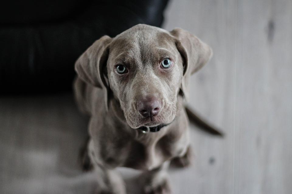 Hundenamen-welcher-passt