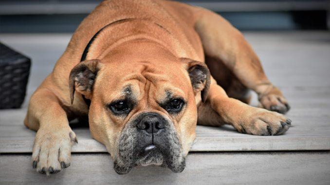 Hund auf Terrasse