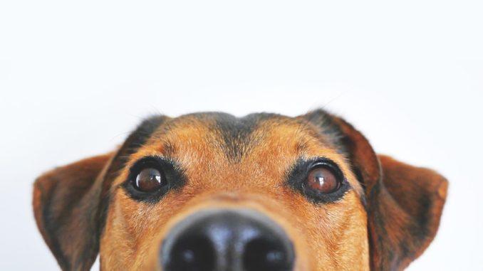 Wie-nennt-man-seinen-Hund