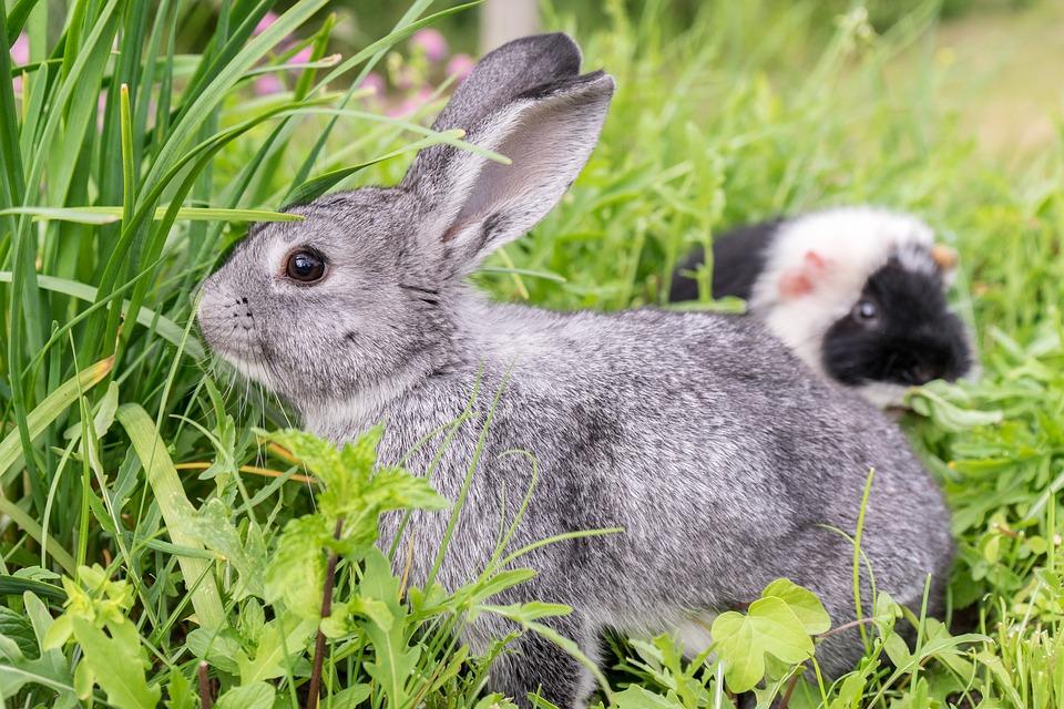 Kaninchen im Gras frisst Kaninchenfutter