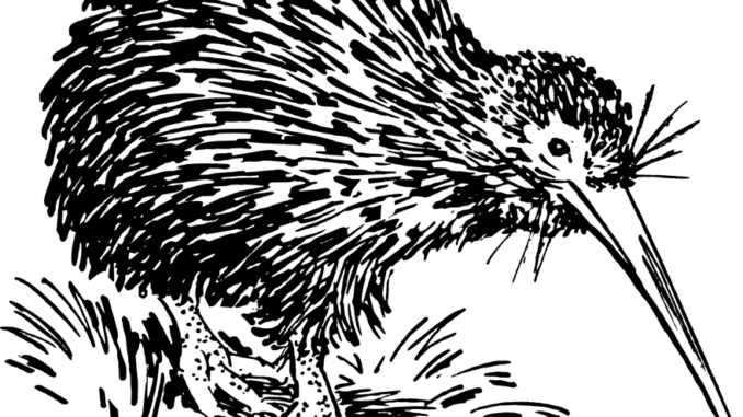 Kiwi Tier, Kiwi Vogel als Zeichnung