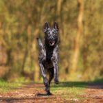 Heilerde fuer Hunde fuer eine bessere Lebensqualität